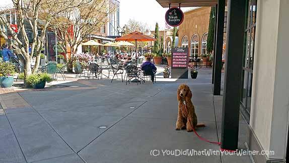University Village Dog