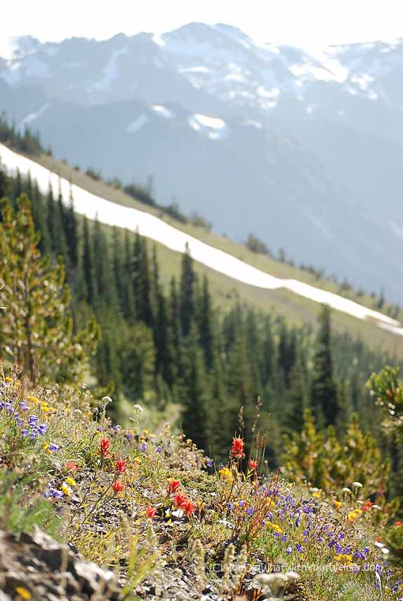 Marmot Pass View 2