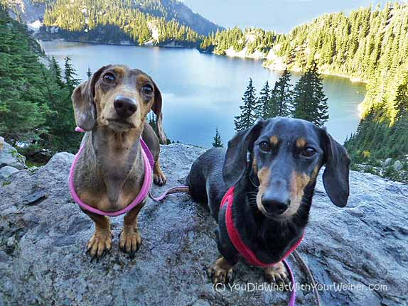 Snow Lake Dogs