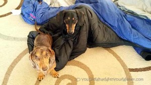 Barker Bag: A Really Different Dog Sleeping Bag