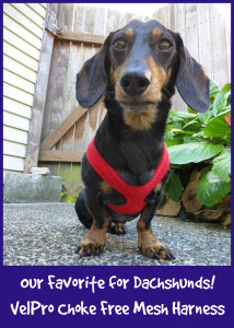 Our Favorite for Dachshunds! VelPro Choke Free Mesh Harness