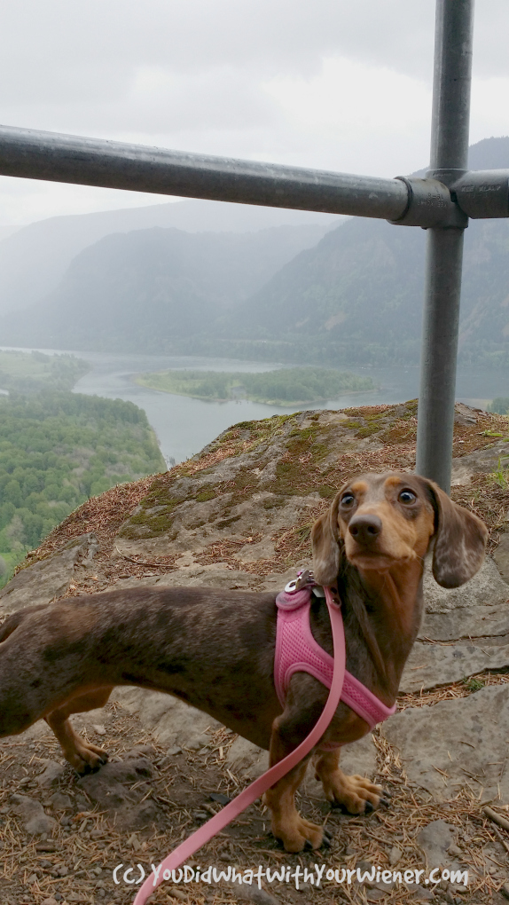 Beacon Rock Gretel