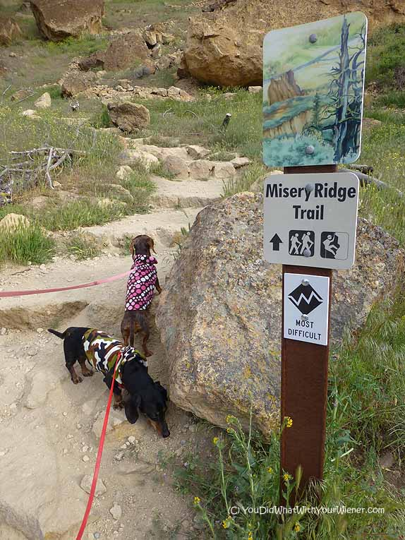 Dog Friendly Misery Ridge Trail at Smith Rock State Park