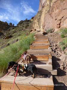 hiking dogs on misery ridge trail in Smith Rock State Park