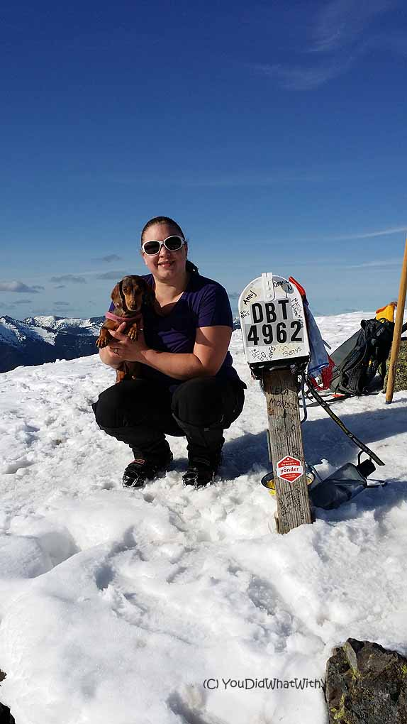 a miniature Dachshund hikes to the top of mailbox peak