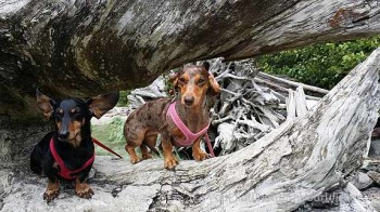 Dog Friendly Adventure Road Trip – Squamish, BC