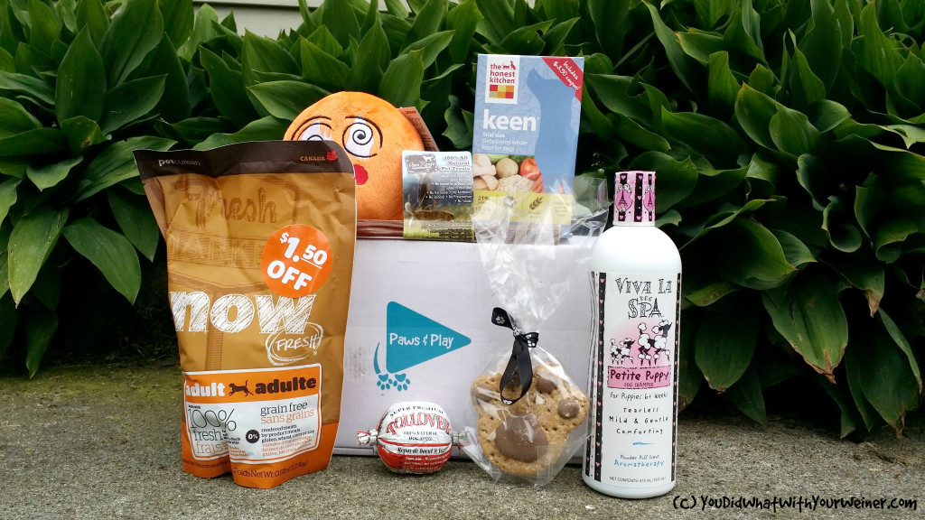 Small dog subscription box from Paws and pPay