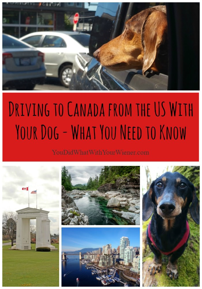 What you need to know about driving across the Canadian border with your dog
