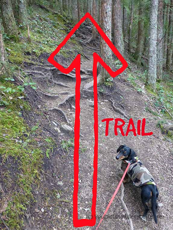 Mailbox Peak Trail is steep