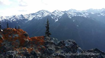 A view of the Olympic Mountains from Marmot Pass