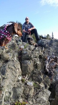 Dachshunds hiking at the top of Marmot Pass