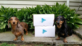 Dog Subscription Box Review: Paws & Play