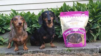 Jones Natural Chews Helps Us Sneak Out of the House
