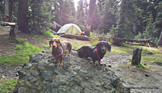 Chester and Gretel at Camp Mystery - Marmot Pass