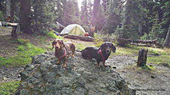 Dog Friendly Trail: Marmot Pass via the Upper Big Quilcene