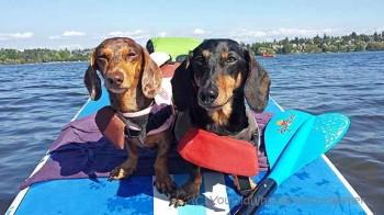 Aqua-Bound Freedom 4-piece SUP Paddle Review