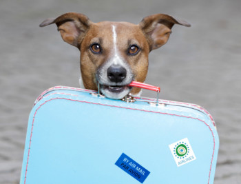 Best Websites for Planning a Dog Friendly Vacation