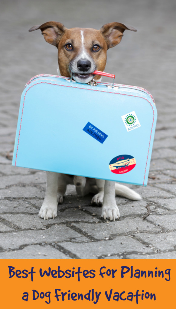 Traveling with your pooch: Best websites for planning a dog friendly vacation