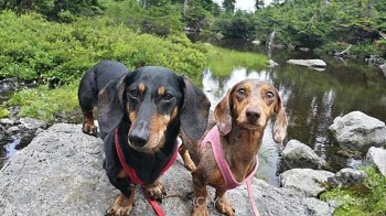 Rampart Ridge 1 - Two Dachshunds Hiking