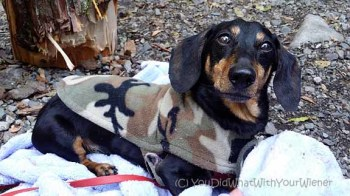 Camping Out With 9 Wiener Dogs
