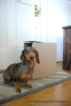 Gretel Box C