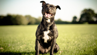 4 Apps to Keep Your Dog Happy and Healthy