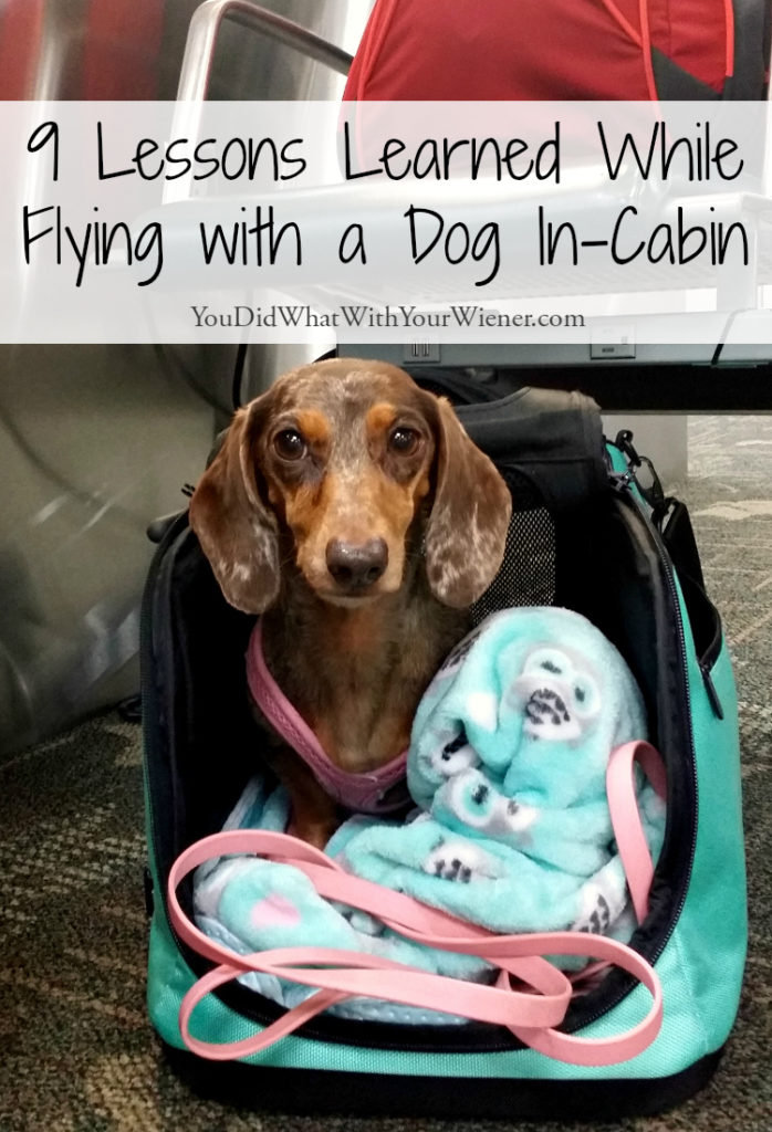 Lessons Learned While Flying With A Dog