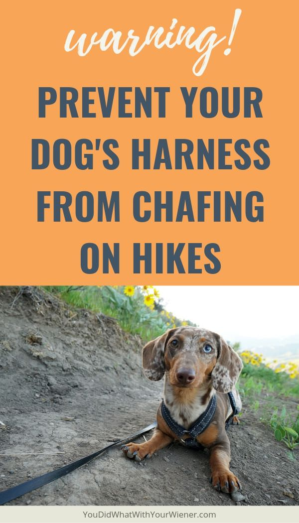 Is Your Dog Active? Beware of Harness Chafing