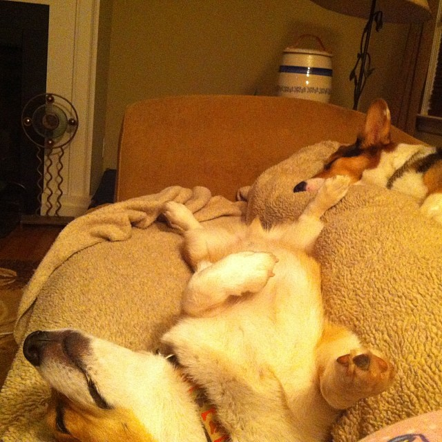 Barron and Earl Passed Out after a Hard Day at Work - Photo Courtesy 4 Paws Pottery