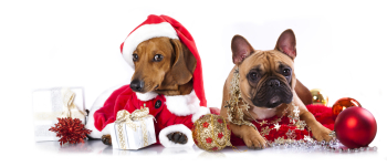 How Much Do Pet Parents Spend on Holiday Gifts for Their Pets?