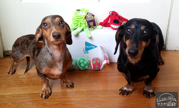Dog Subscription Box Review Paws Amp Play Exclusively Toys Box