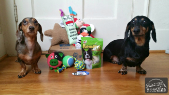 Dog Subscription Box Review: Pet Giftbox