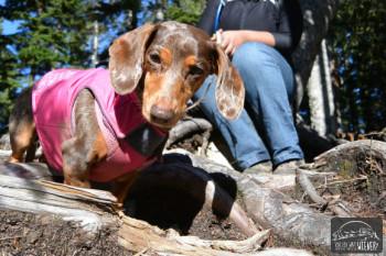 Dog Friendly Hike: Lake Serene