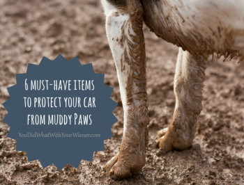 Protect Your Car from Muddy Paws