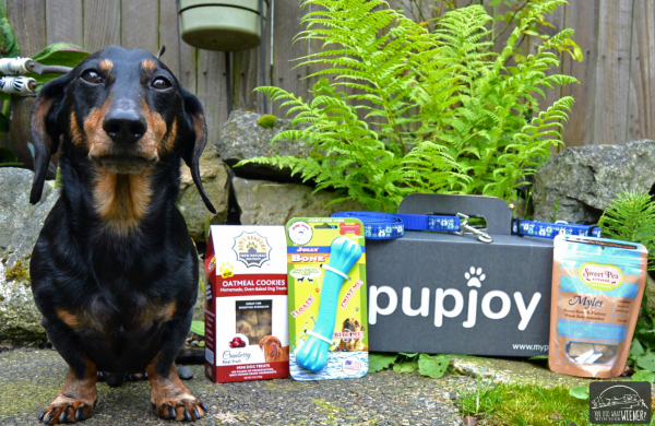 Chester with His PupJoy Box