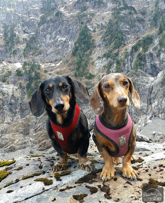 Lake Twentytwo - Chester and Gretel with Mount Pilchuck