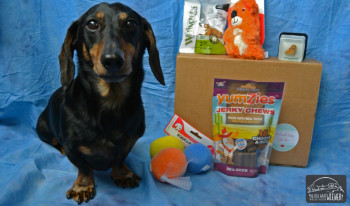 Dog Subscription Gift Box Review: May PawPals With Annie Box