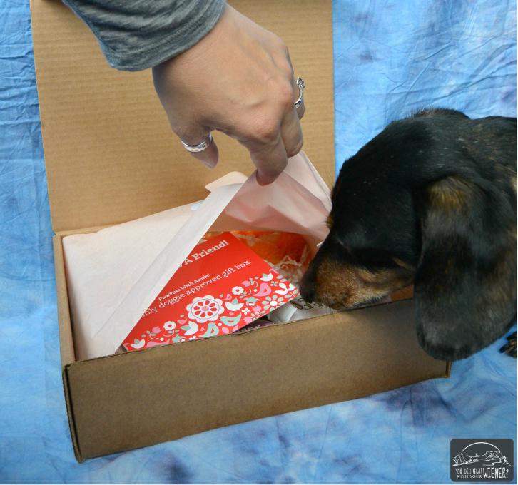 Peeking Inside the PawPals with Annie Gift Box