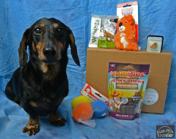 PawPals with Annie monthly dog box - Chester with his box