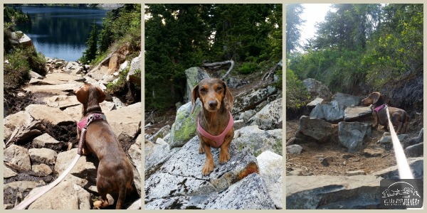 Hiking Dachshund on the Gem Lake Trail