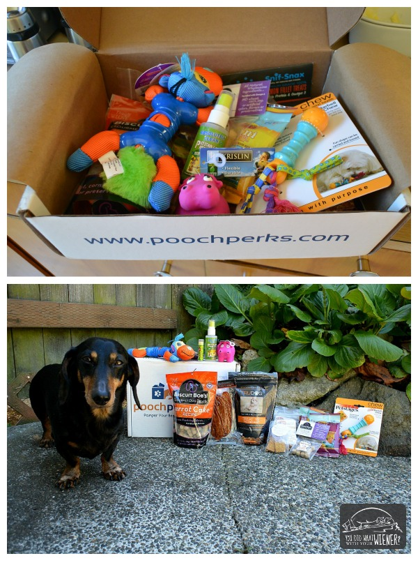 What's Inside Our Pooch Perks Subscription Box