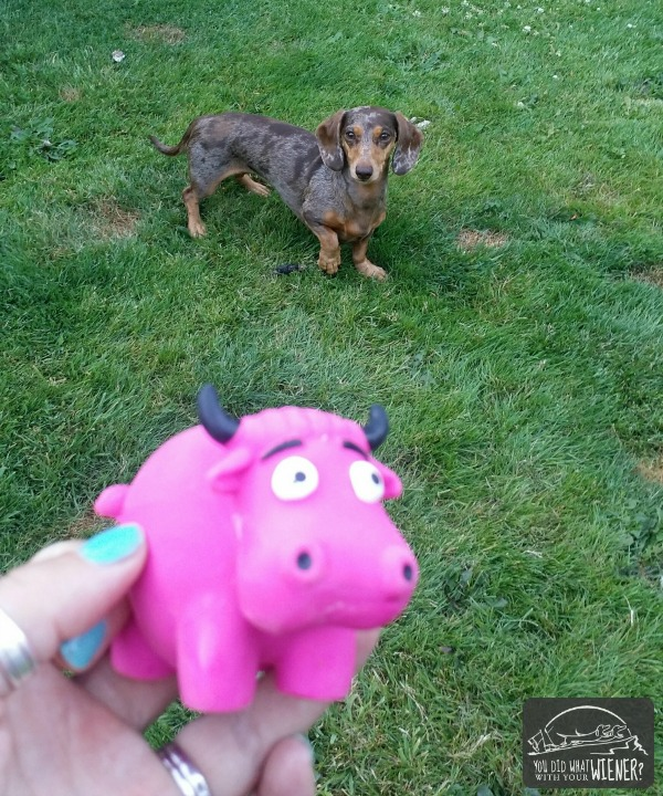 Pink Squeakie Cow from our Pooch Perks Subscription Box