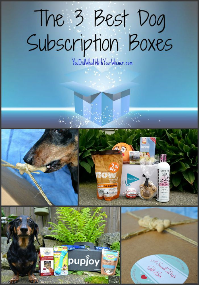 The Top 3 Subscription Boxes #dogtoys #dogtreats