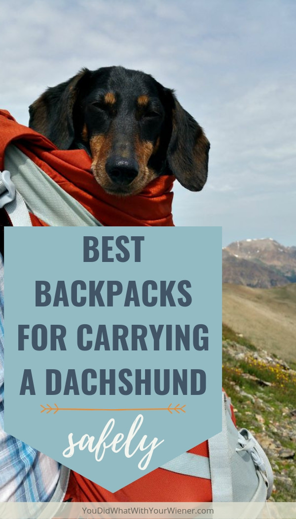 I've been searching for years to find a backpack to carry my dog on the trail. Very few are both safe for a Dachshund's back and practical to use hiking. Here are my expert picks of best backpacks for carrying a Dachshund.
