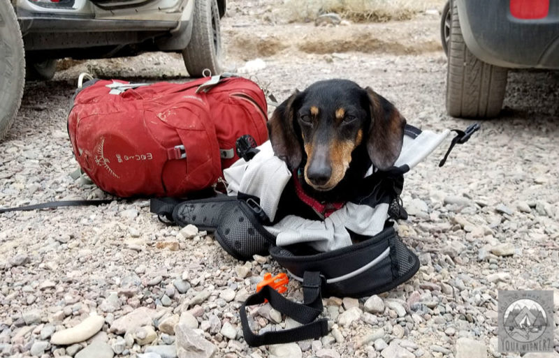 Dachshund laying on the ground in a K9Sportsack backpack after a hike