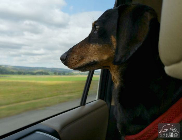 Chester watching the scenery