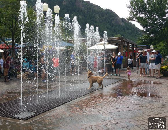 Doggie playing in the fountain in Aspen, CO