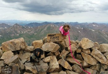 Chester and Gretel made it to the top of a 14er!