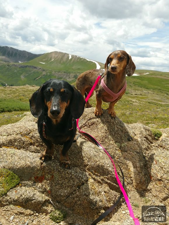 Chester and Gretel hanging out on Independence Pass, CO
