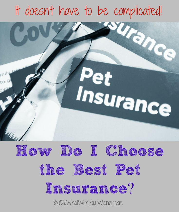 This comparison chart will help you choose the best pet insurance